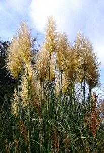 Using Ornamental Grass in Landscaping