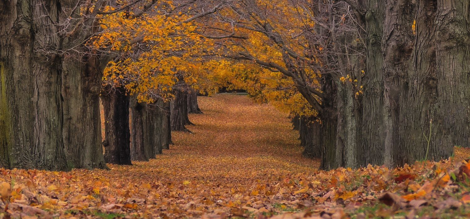Best New Jersey Hiking Trails to See Fall Leaves Change Color