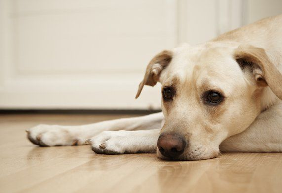 7 Things You Should NEVER Do to Your Dog