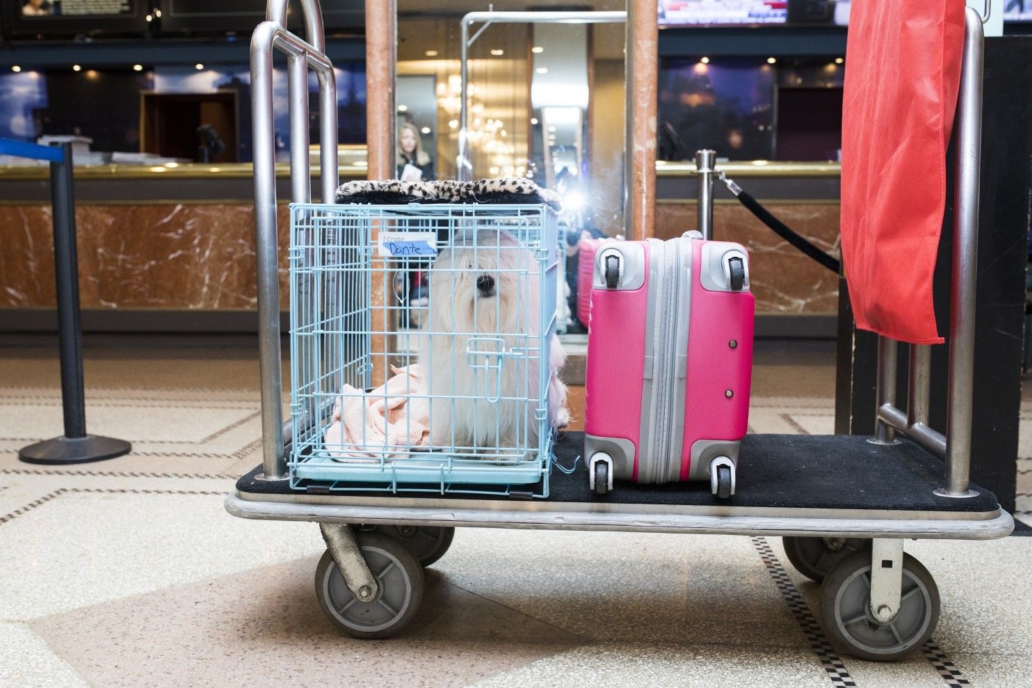 Dog treadmills and fake fire hydrants: How hotels host Westminster show dogs