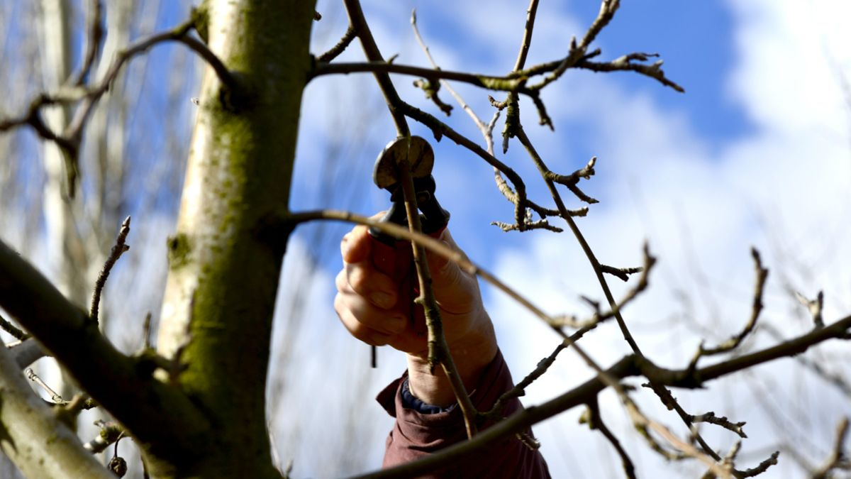 Arborist Advice: Why Should You Prune Your Trees During the Dormant Season?