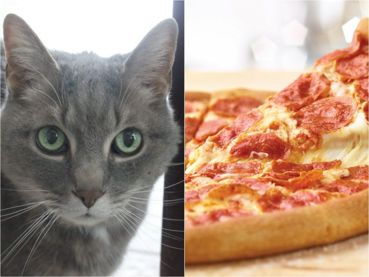 Pizza Delivery Guy Once Received Kitten As A Tip, Still Has It 17 Years Later