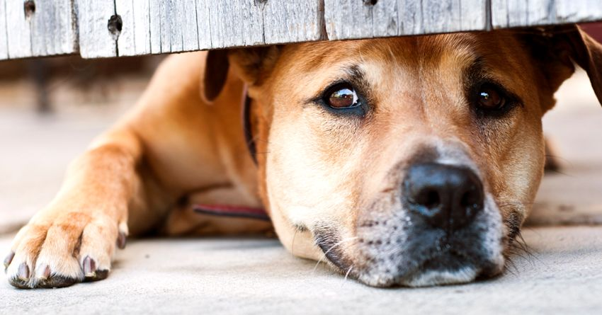 6 Tips for Boarding a Dog with Separation Anxiety