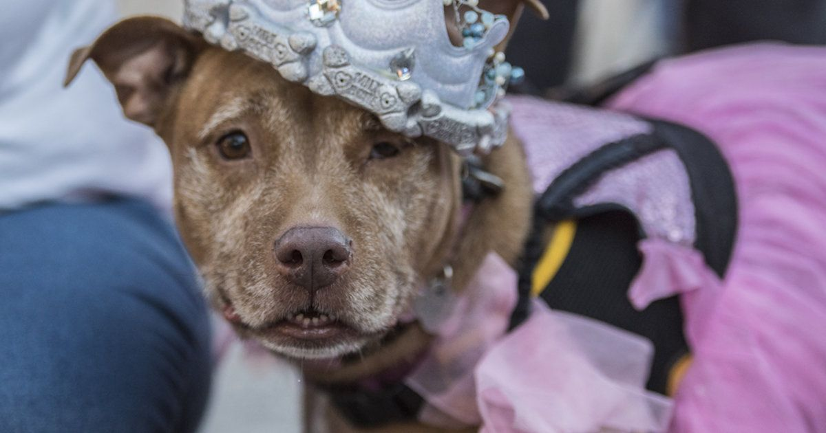 "Older Dogs Get A ""Senior Prom"" To Help Them Find Homes"