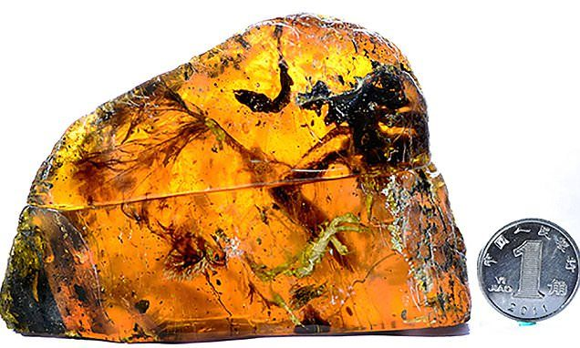 100 million year old bird found trapped in  Myanmar amber