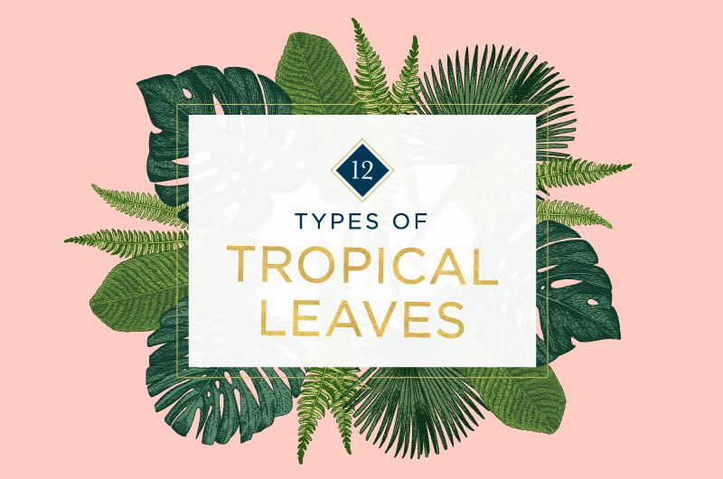 12 Types of Tropical Leaves to Bring Paradise Into Your Home