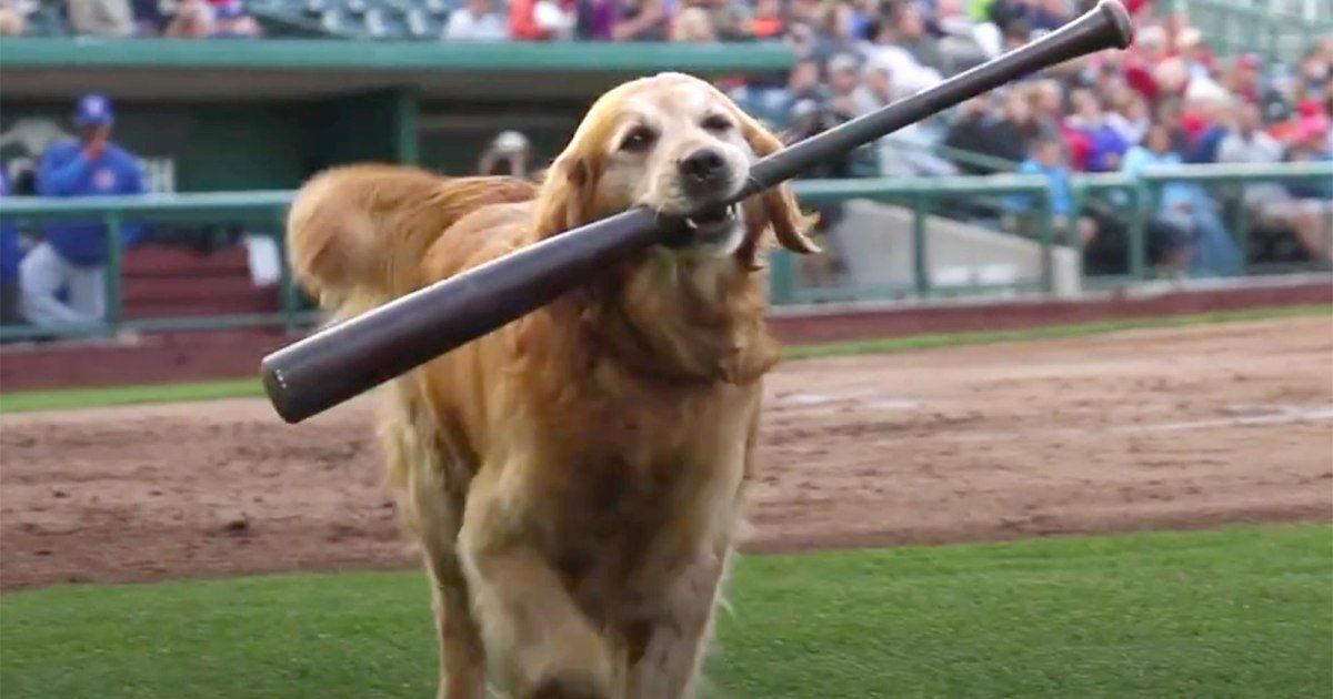 WATCH: Jake the Diamond Dog Is the Cutest Baseball Star You've Probably Never Heard Of