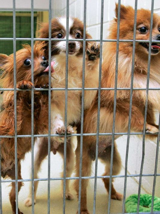 NJ lawmakers move to regulate pet sales