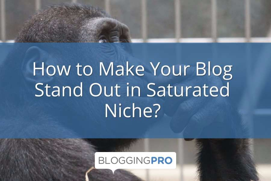 How to Make Your Blog Stand Out in Saturated Niche?
