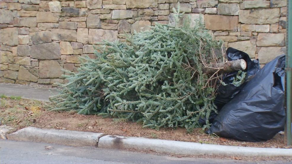 Some options for disposing of Christmas trees in Asheville