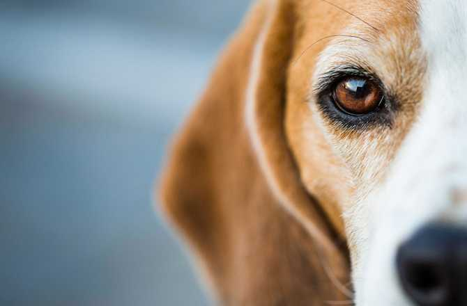 6 Fascinating Facts About Your Dog's Eyes