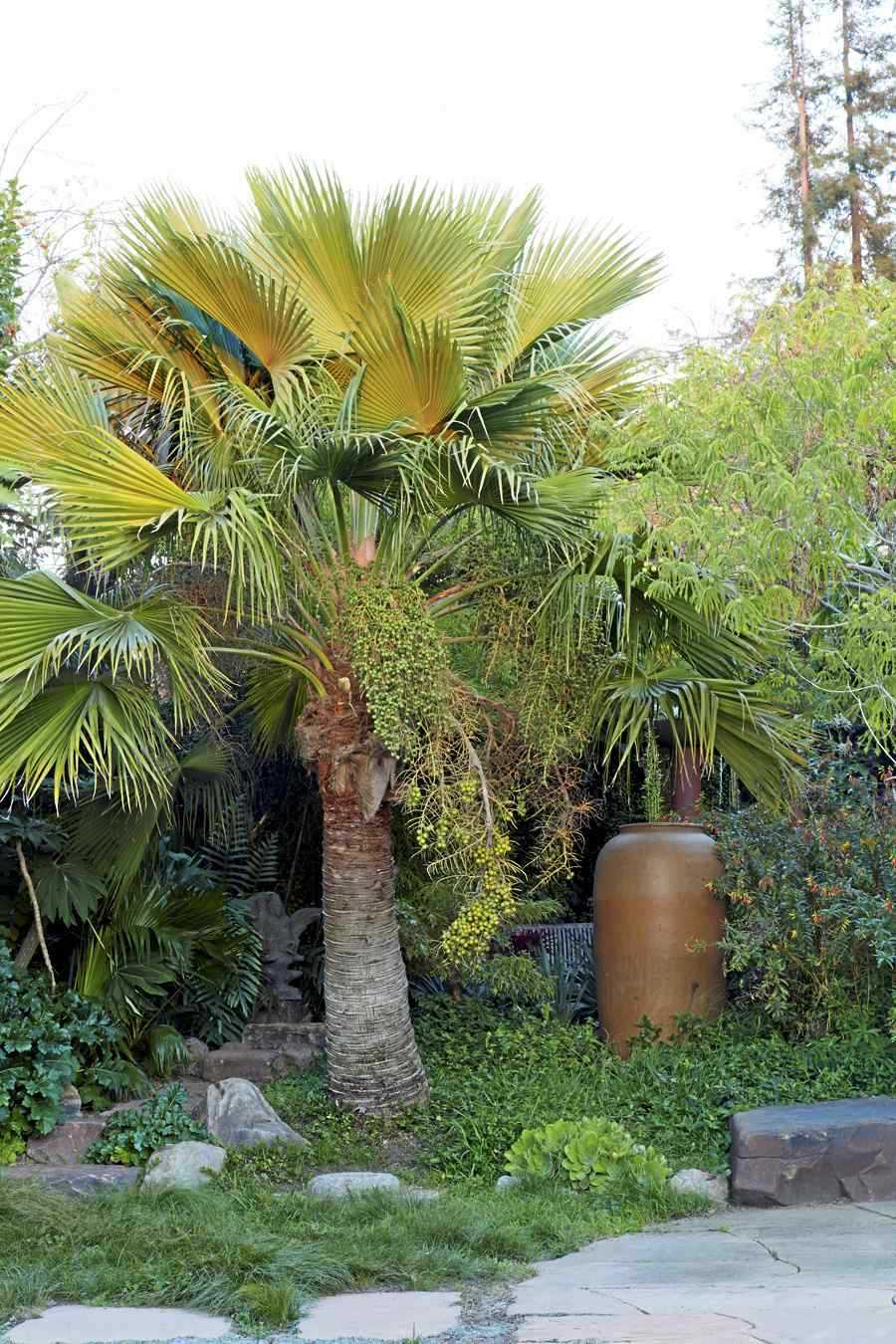 There's a palm tree for every garden, horticulturist says
