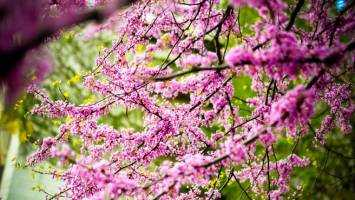 Brighten your garden with trees