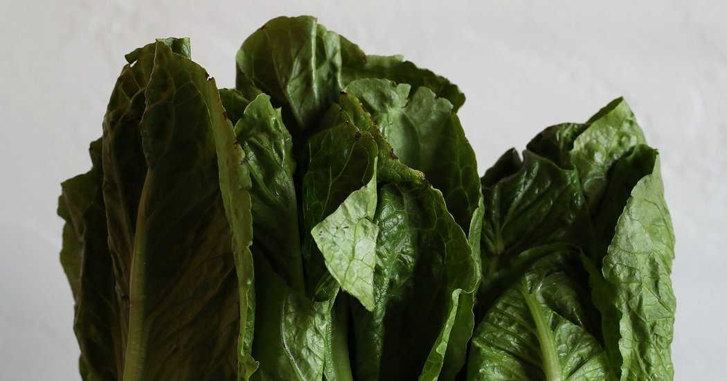 Romaine Riddle: Why the E. Coli Outbreak Eludes Food Investigators
