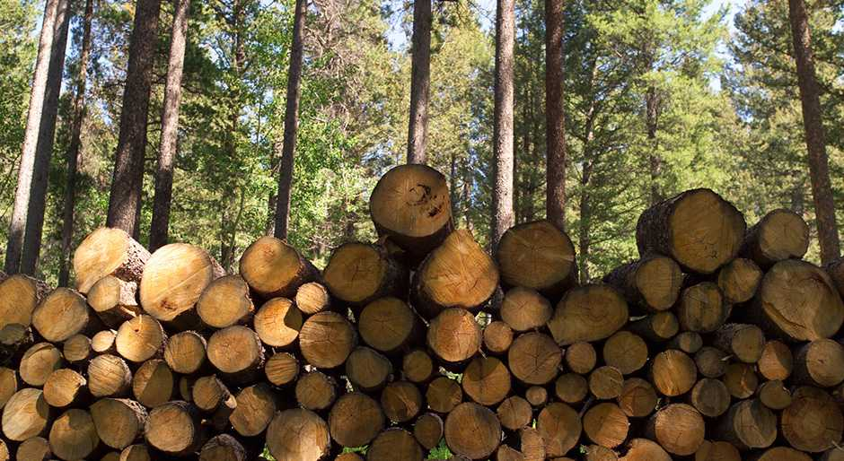 CatchMark partnership buys East Texas timberlands for $1.39b