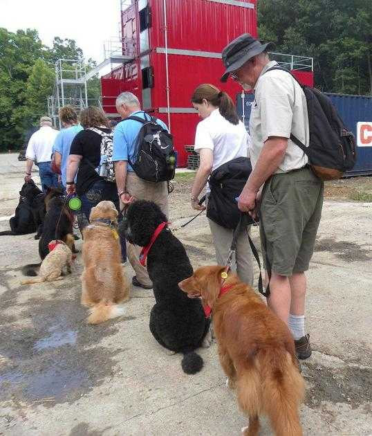 DSR training for therapy dogs held at Wellston