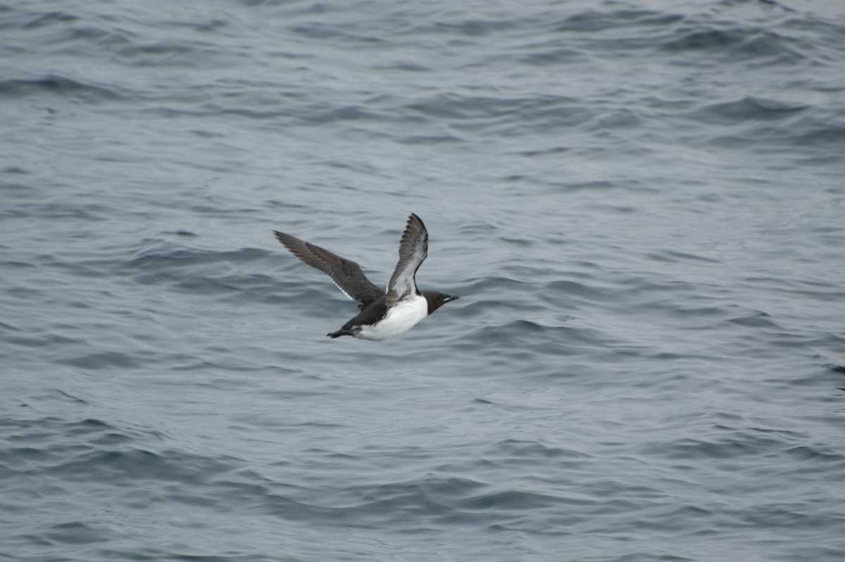 For the fourth year in a row, a seabird die