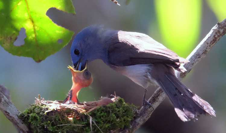 World's Birds Eat Hundreds Of Tons In Insects
