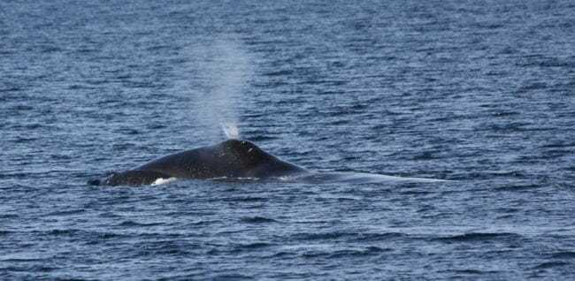 International Whaling Commission votes to change subsistence quota renewal process