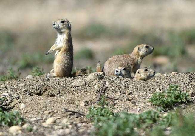 Boulder budget, prairie dog discussion on council agenda Tuesday