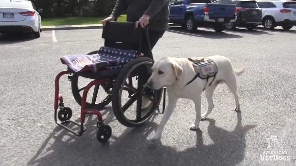 Local service dog charities help military veterans with dogs like Sully
