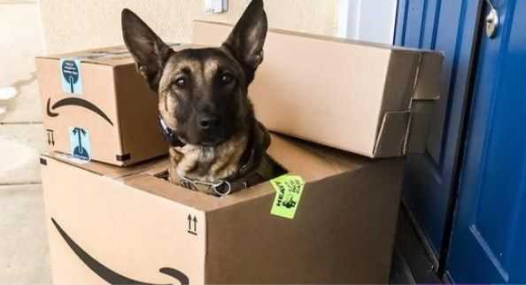 "Operation ""Santa's Claws"": Post raised awareness about package thieves"