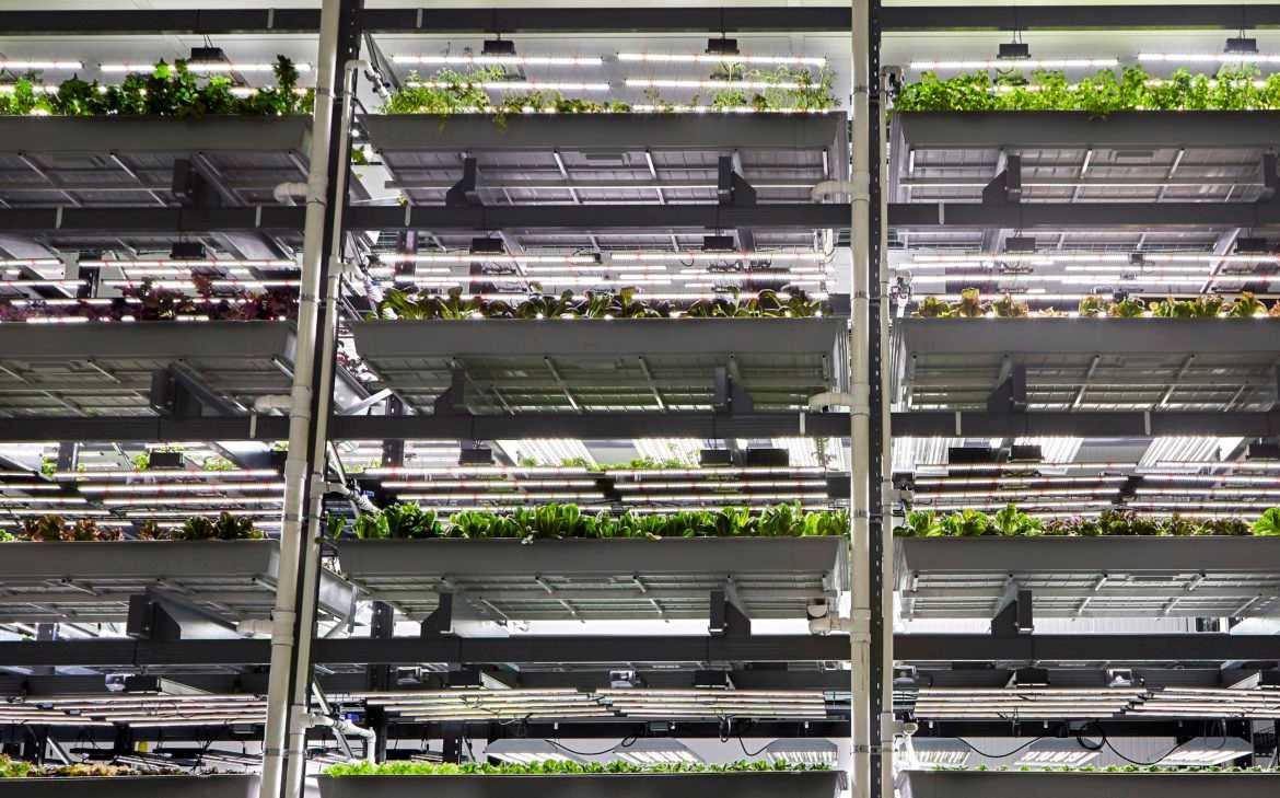 Indoor farm will tap solar microgrid to keep plants growing year-round