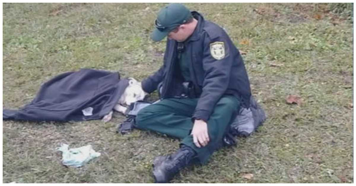 Police Deputy Helps Dog Hit By Car, Photo Explodes On Social Media