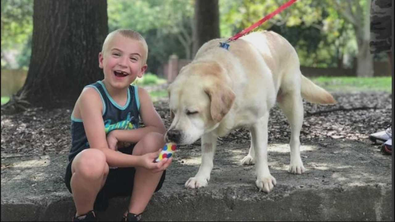 Local boy making national headlines by saving dogs