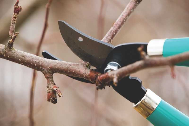 Bargain Hunter: Learn how to do your winter garden chores with free classes at Armstrong Garden Centers