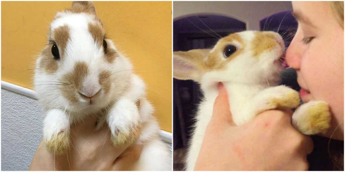 Tiny Rabbit Dumped At Shelter For Being 'Too Affectionate'