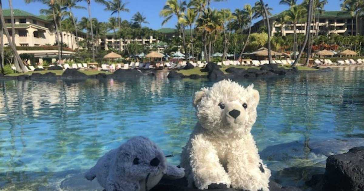 Boy leaves beloved bear behind, Hawaii hotel sends it on adventures