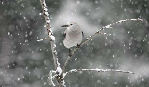 How Birds Survive Winter