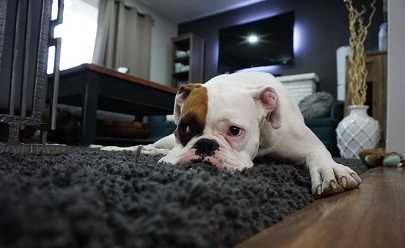 Tips on Getting Rid of Common Pet Odors
