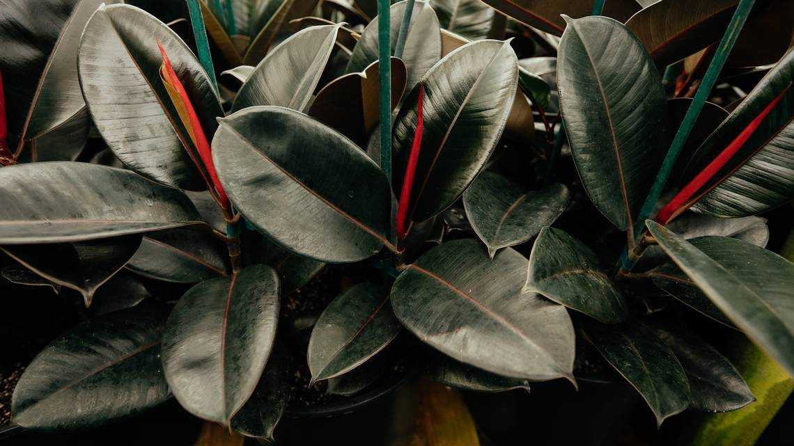 7 must-have houseplants to brighten your home
