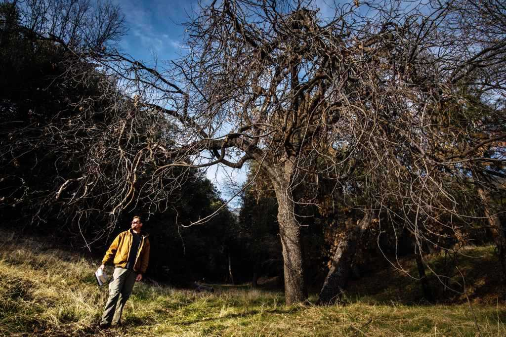 18.6 million trees died in California in 2018, Forest Service survey finds