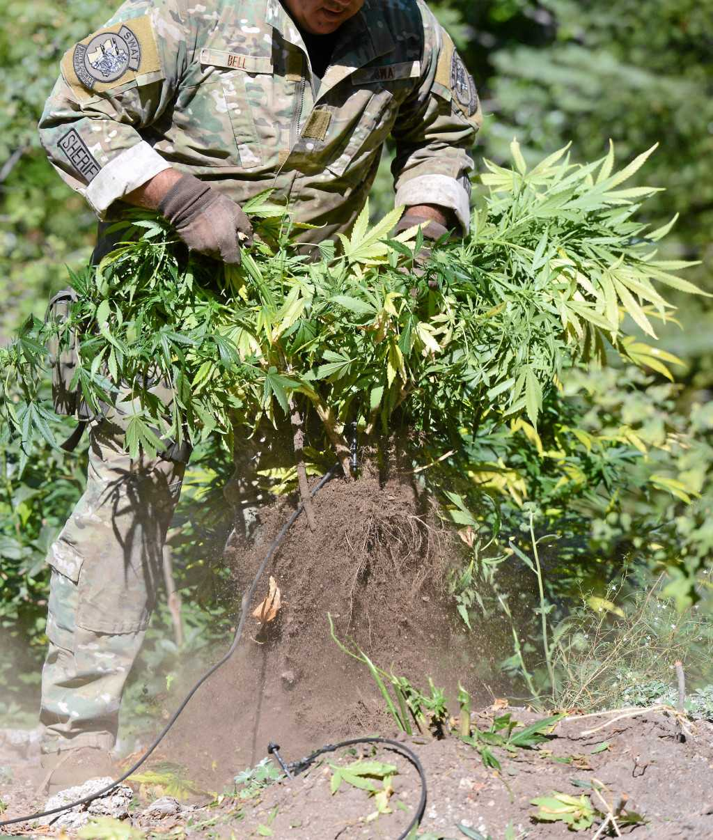 National Guard troops headed north to tackle illegal pot grows, Gavin Newsom announces