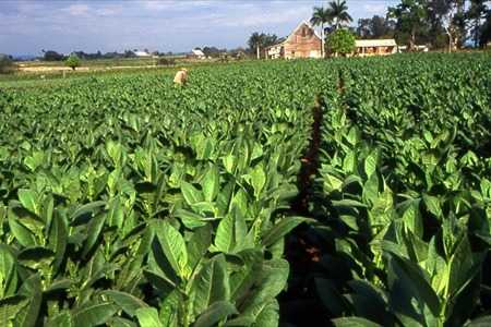 More than $2 million awarded in tobacco settlement funds to KY farms