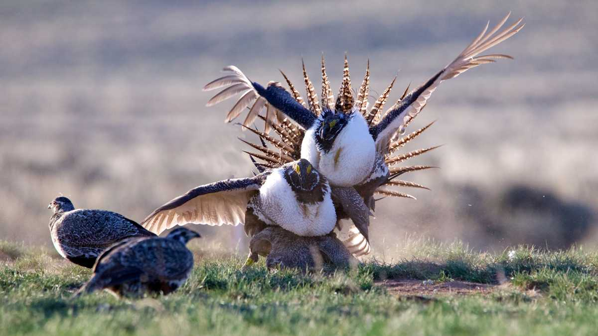 Ten Strange, Endearing and Alarming Animal Courtship Rituals