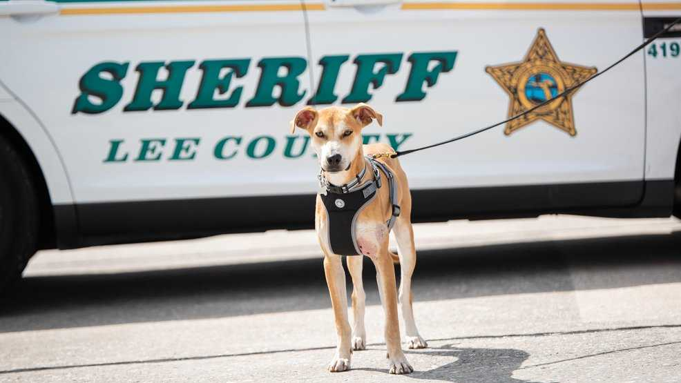 Dog found with mouth taped shut gets new 'Chance' as K9 deputy