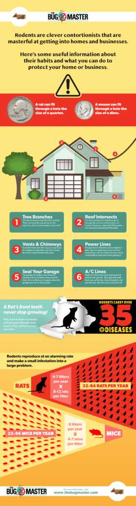 How To Protect Your Home From Rodents?