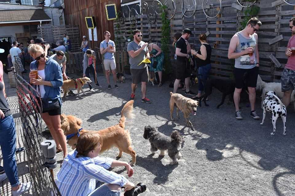 Bring Fido to Dogs of Peddler Party!