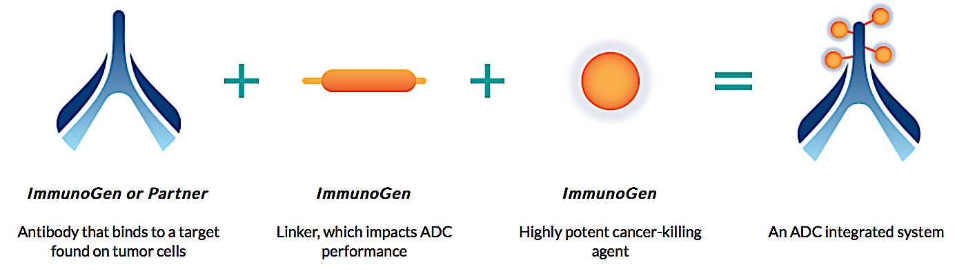 ImmunoGen: Assessing The Possibility Of A Turnaround
