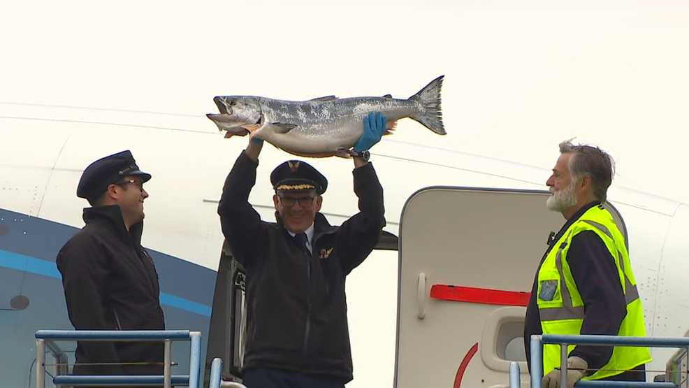Something fishy at Sea-Tac: Season's first Copper River salmon arrive!