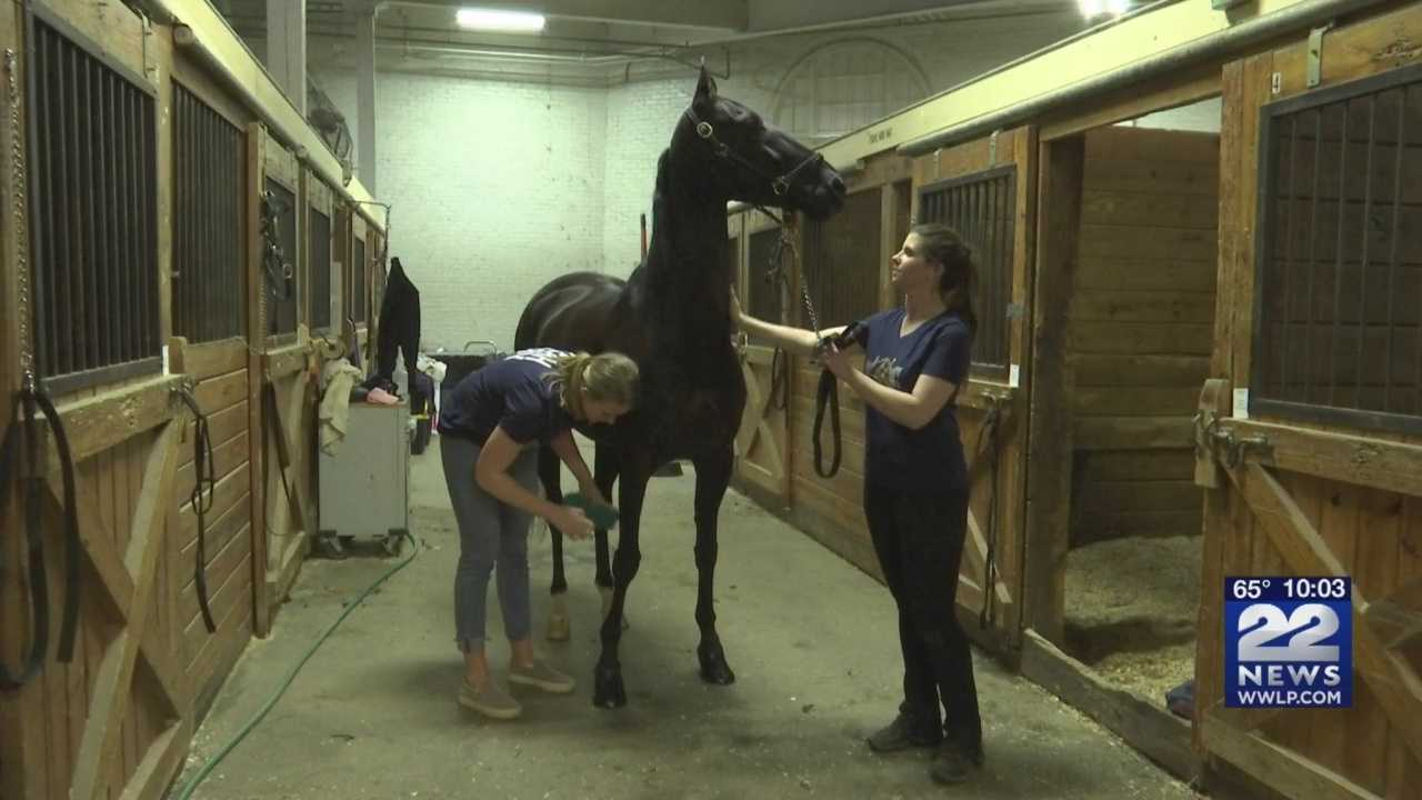 Greater Boston Charity Horse Show held at Eastern States Exposition