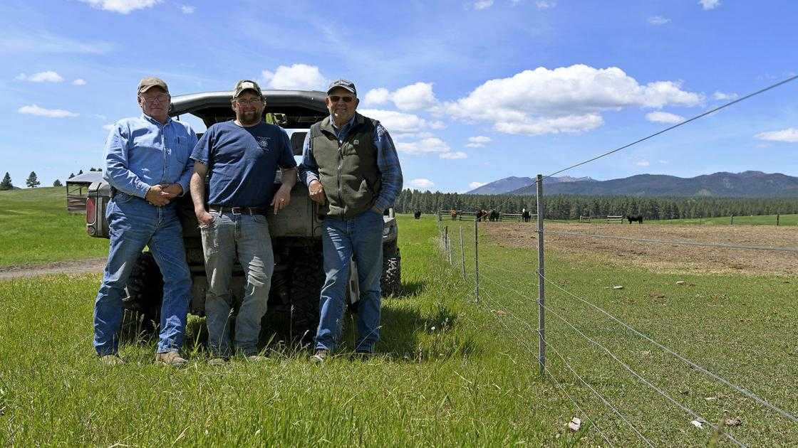 Ranchers work up tactics to deal with grizzlies
