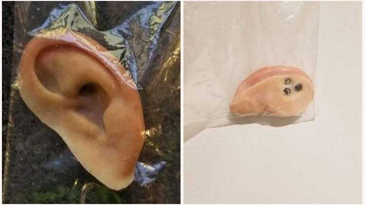 Are you missing an ear? It may have been found on a Central Florida beach