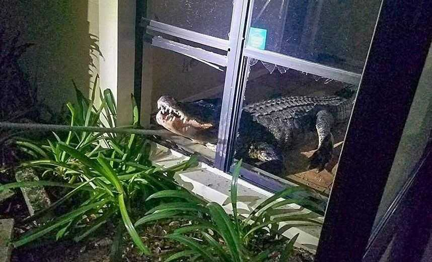 Central Florida woman says 11-foot alligator crashing into her home was a 'fun thing'