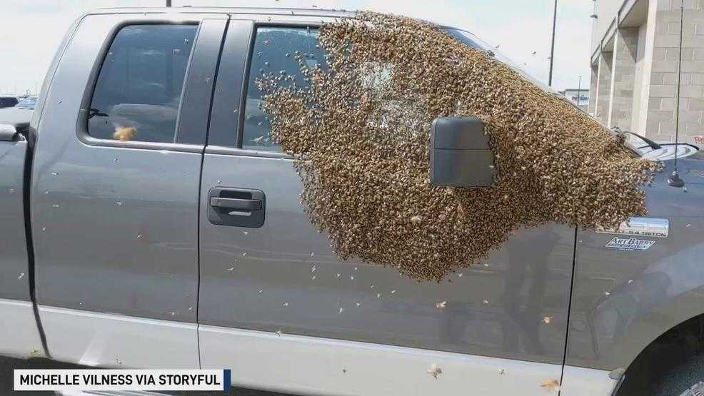 Swarm of bees covers pickup at Saskatoon Costco