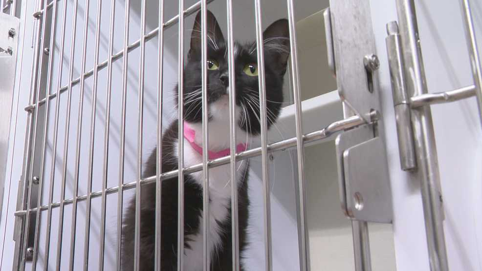 McKamey Animal Center asking for fosters ahead of Tropical Storm Barry